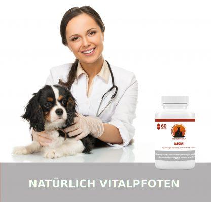 Tierarzt MSM Kapseln organischer Schwefel DosierungHund katze