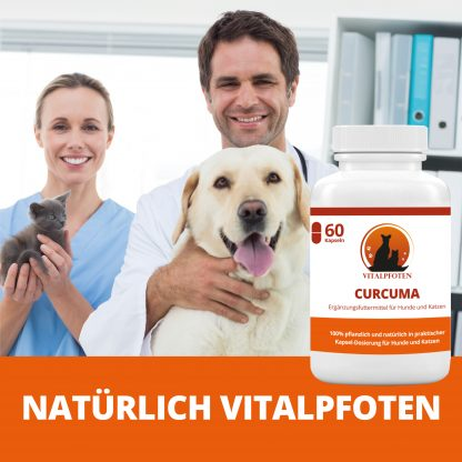 Tierarzt Curcuma Curcumin Kapseln Piperin Kurkuma Kurkumin Hund Katze Welpen Kitten