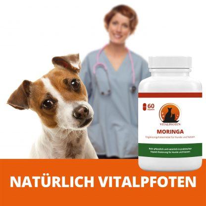 Moringa Tierarzt Kapseln Hund Katze