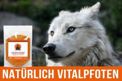 Hund Wolf Curcumin Kurkuma Kurkumin Pulver Haustier Tier Katze