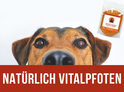 Curcuma Curumin Pulver Hund Katze Piperin Mischung Vitalpfoten
